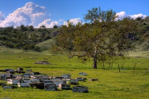 Orchard with crates