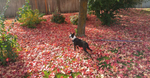 Harley-In-Fall